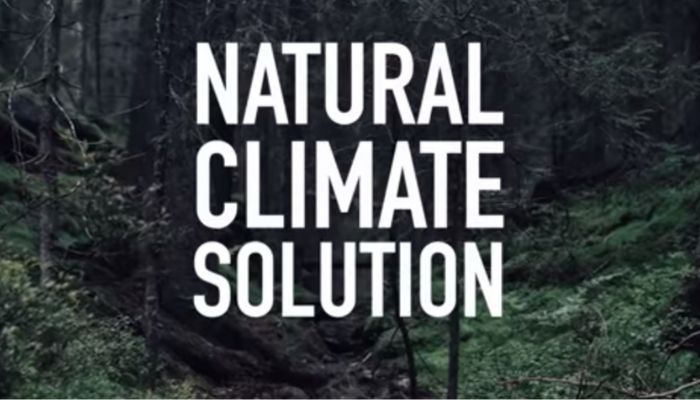 Frame dal video #naturenow di Greta Thunberg